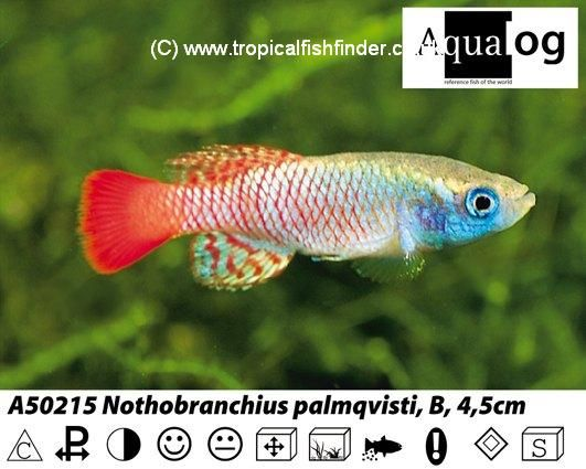 Tropical Fish Finder co uk - The ultimate UK fish keeping