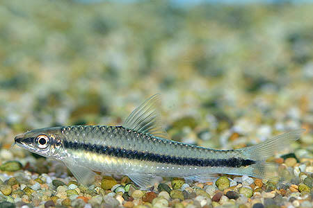 Tropical Fish Finder.co.uk - The ultimate UK fish keeping resource for ...