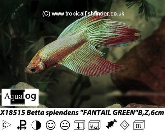 Tropical Fish Finder.co.uk - The ultimate UK fish keeping ...