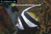 Ten reliable marine fish for beginners