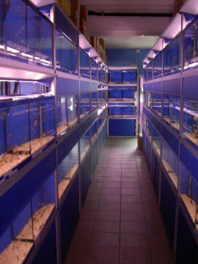 Tropical fish the ultimate uk fish keeping for Wholesale tropical fish