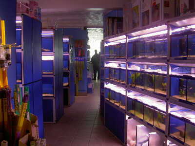 Tropical fish the ultimate uk fish keeping for Tropical fish wholesale